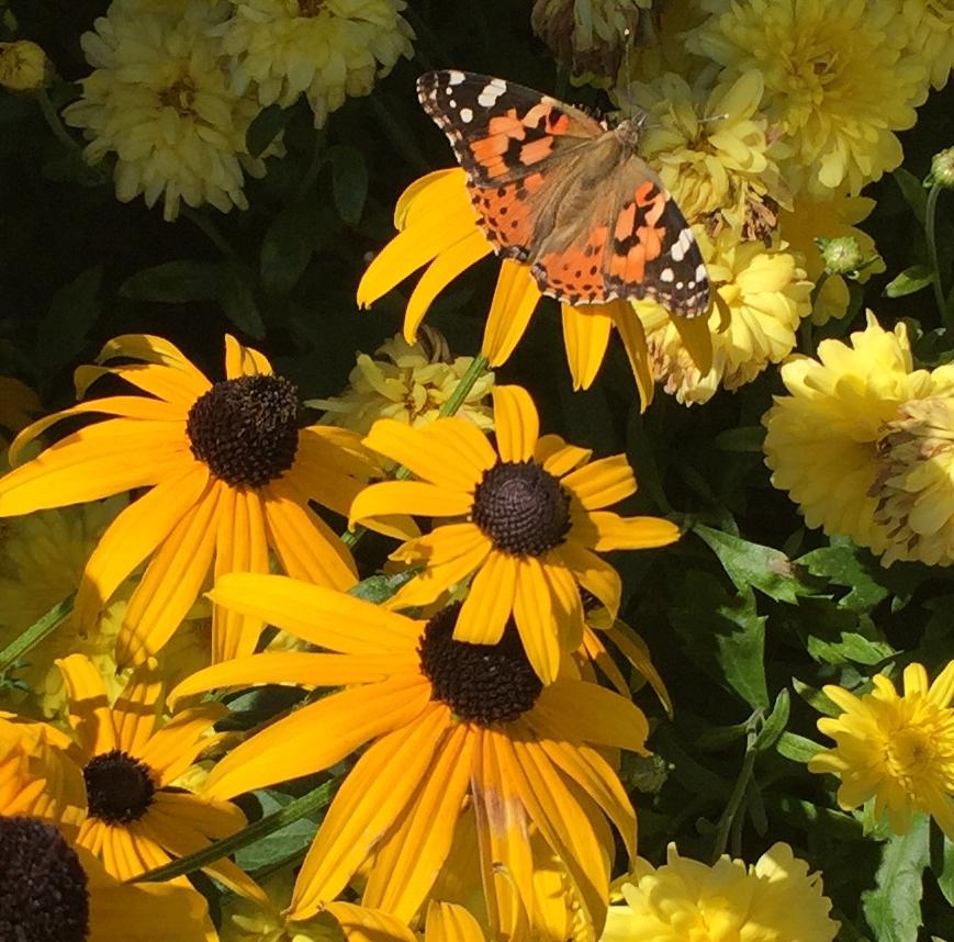 Butterfly Garden 2019